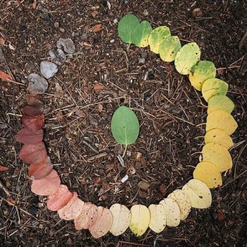 Circle of leaves of different ages making up a spectrum